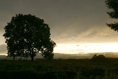 胡桃の丘 豪雨が過ぎて