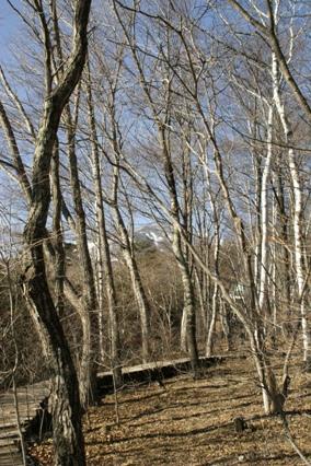 木々の向こうに八ヶ岳