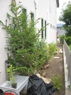 植栽がスタンバイ
