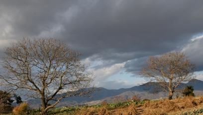 くるみの樹と.JPG