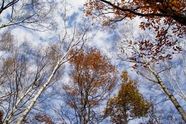 マーブル模様の空
