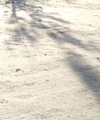 ヤマコウバシの影
