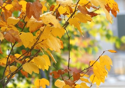 黄色の葉っぱ