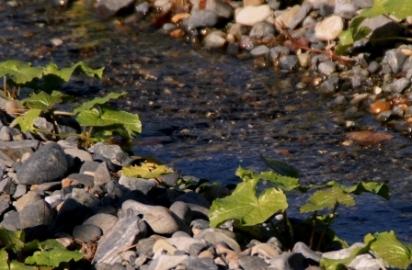 綺麗な水で育ちます