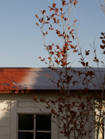 赤い屋根に白い霜