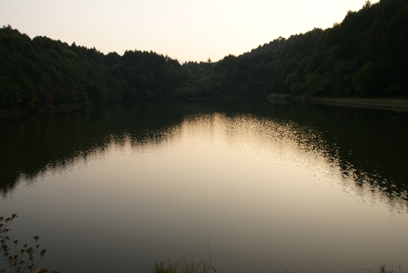 森の向こうに日は沈み