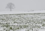 雪の胡桃の丘