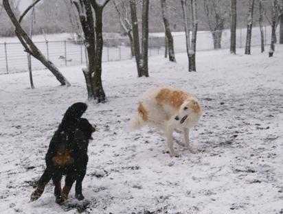 犬は喜び走り回る