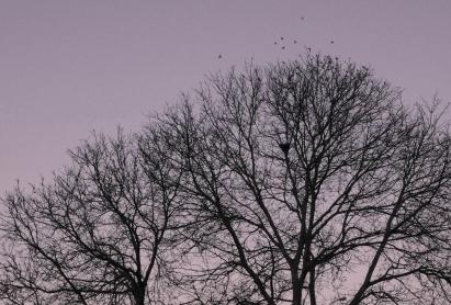 スズメが飛び立つ