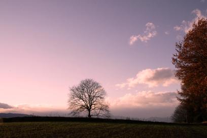 大木と.JPG