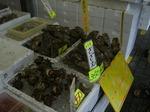 牡蠣やサザエ