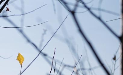 菱形をした黄色い葉