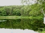アクオスのCMとは別の池です