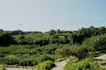 立科りんご畑