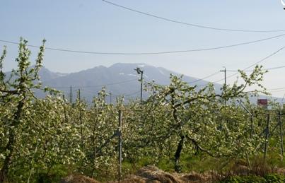 浅間山とジャスコの看板