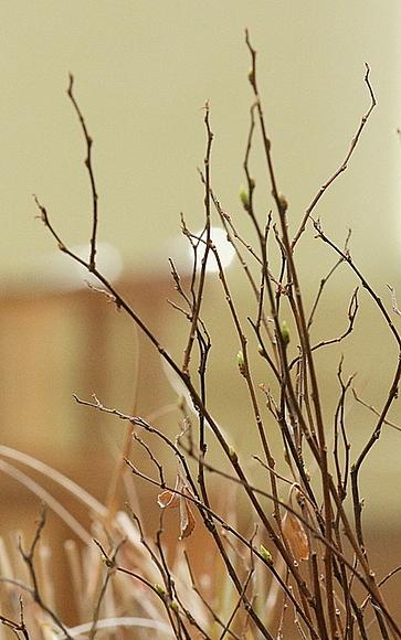 竹串くらいの細さです