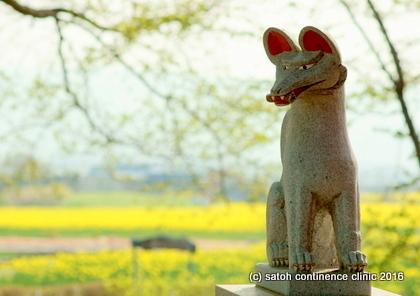 佐久市瀬戸の菜の花畑 2011.5.7-001.JPG