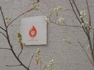 ジューンベリー5分咲き