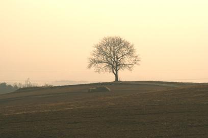 やっと見つけた胡桃の木