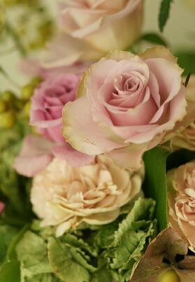 何とも微妙な色合いの薔薇