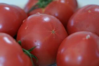 宮坂さんちのトマト